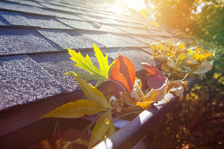 Fall Roof Inspection: Debris, Gaps and Animals – Oh My!